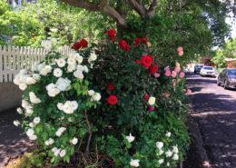 Flowers in Bernicé's Garden